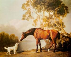 Bay-Horse-and-White-Dog