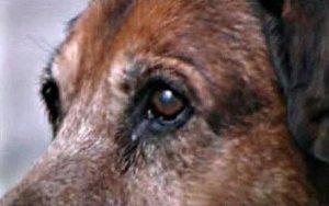 canelo_close-up