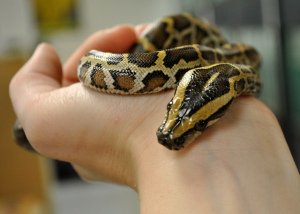 Pet_python