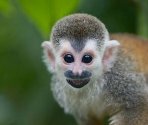 MONKEY BUSINESS, or How to Ruin a Business Deal