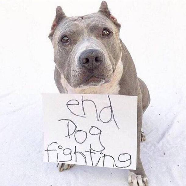 Pitbull_Petition ENG